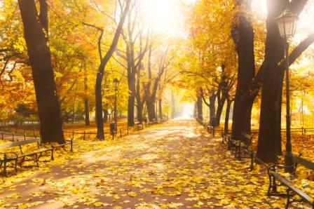 park walkway in fall