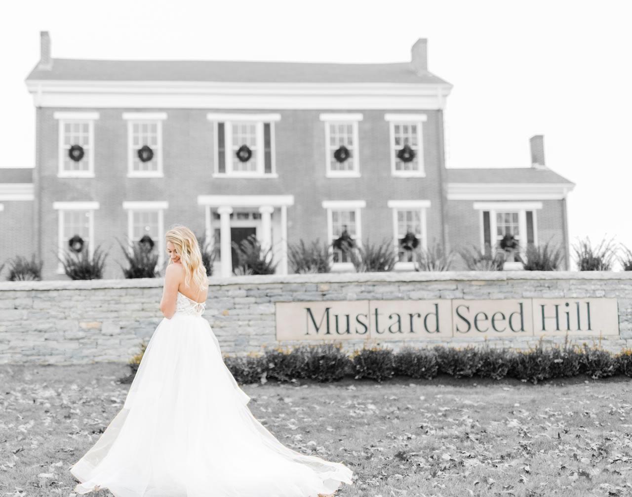 mustart seed hill image