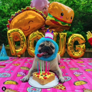 Doug the Pug, Pop Culture Influencer